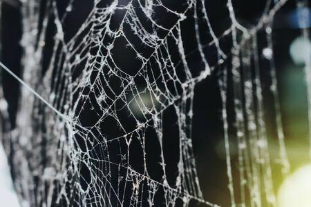 cobweb in the morning. close-up on a dark background. white cobweb