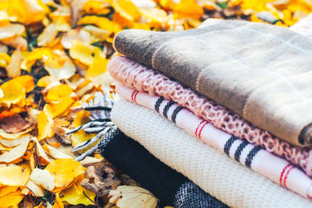 Cozy knitted blankets and scarves on a background of autumn foliage.