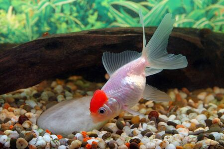 forage: The aquarian small fish collects a forage from a ground
