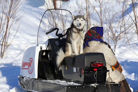 eskimo woman: Nadym, Russia - on March 02, 2014: The Nenets woman and her dog near a snowmobile on a traditional holiday Day of the reindeer breeder. The Nenets - aboriginals of the Russian North