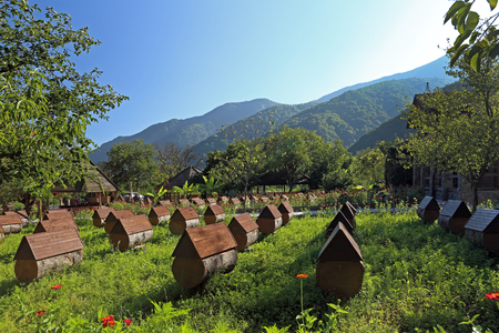 Apiary in the Caucasus Mountains in the sunny day