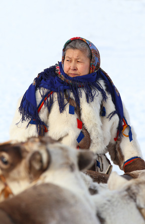 breeder: NADYM, RUSSIA - MARCH 14, 2015: the Nenets woman among deer during a traditional holiday Day of the reindeer breeder. Nenets - aboriginals of the Russian North