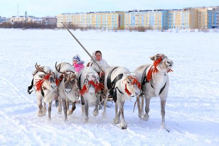 """operates: Nadym, RUSSIA - 14 marzo 2015: la donna Nenets gestisce una squadra di cervo durante una vacanza tradizionale """"Giornata di allevatori di renne"""". Nenets - aborigeni del nord russo Editoriali"""