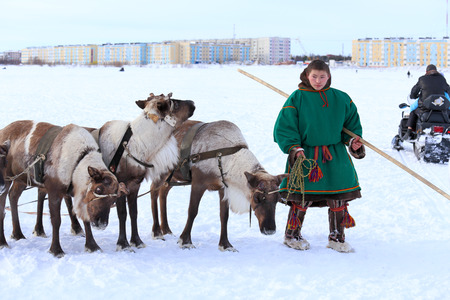 breeder: NADYM, RUSSIA - MARCH 14, 2015: The young man the Nenets with a cervine team during the holiday Day of the reindeer breeder. Nenets - aboriginals of the Russian North