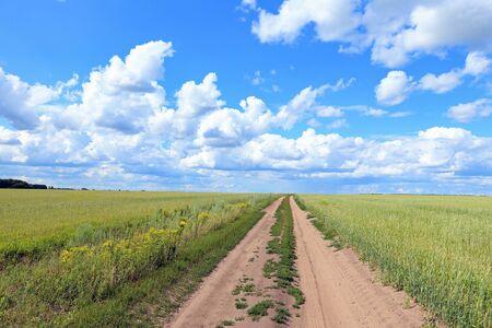horizon: El camino entre campos de trigo en Siberia