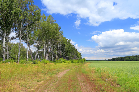 open spaces: Siberian open spaces in the summer afternoon Stock Photo