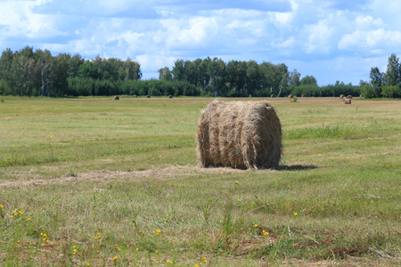 haymaking: Haymaking in the summer afternoon