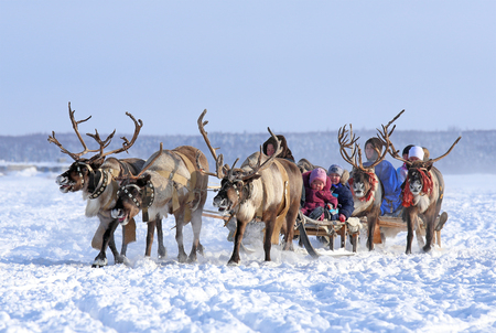 Nadym, Russia - March 01, 2014: People ride deer during the holiday Day of the reindeer breeder. Day of the reindeer breeder - a traditional holiday of the tundra population