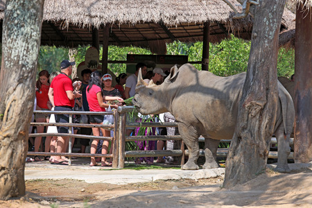 december 25: Thailand - DECEMBER 25, 2013: tourists communicate with a rhinoceros Editorial