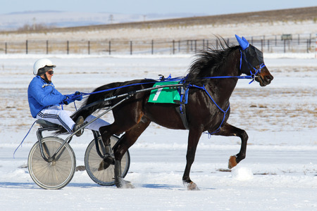 blinders: BELOKURIKHA, RUSSIA - MARCH 12, 2016: Races on the American trotters during the holiday Farewell to winter