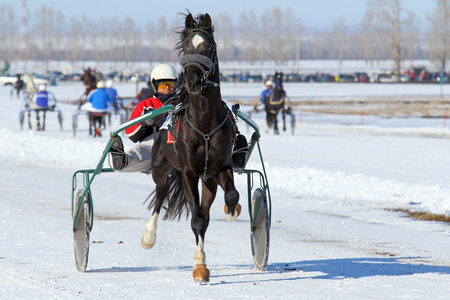 belokurikha: BELOKURIKHA, RUSSIA - MARCH 12, 2016: Races on the Oryol trotters during the holiday Farewell to winter