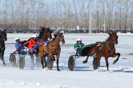 belokurikha: BELOKURIKHA, RUSSIA - MARCH 12, 2016: Arrivals on horses were open for the audience with free access within the traditional Russian holiday Farewell to winter http:siberianmas.ruabout