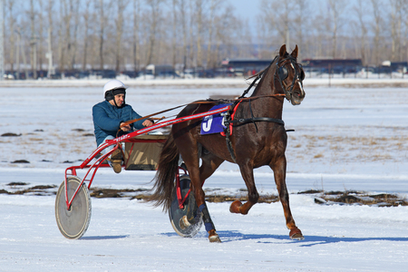 blinders: BELOKURIKHA, RUSSIA - MARCH 12, 2016: Races on the Oryol trotters during the holiday Farewell to winter