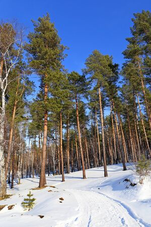 piny: The pine wood at the beginning of March