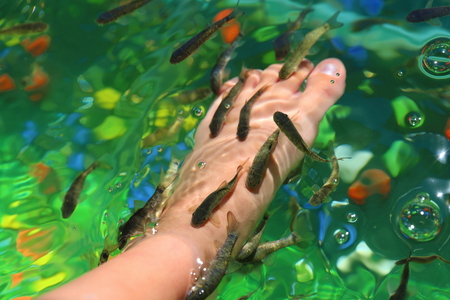Cleaning of a body by means of fishes Stock Photo