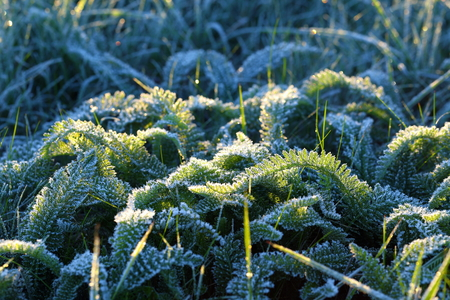 Green grass in hoarfrost at sunrise Stock Photo