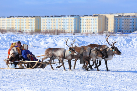 NADYM, RUSSIA - MARCH 05, 2017: the Nenets woman operates a cervine team during a traditional holiday Day of reindeer breeders. Nenets - aboriginals of the Russian North