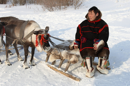 NADYM, RUSSIA - MARCH 07, 2010: Nenets man among deer. Nenets - aboriginals of the Russian North