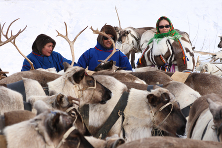 NADYM, RUSSIA-MARCH 16, 2008: Nenets men and woman among deer. Nenets - aboriginals of the Russian North 報道画像