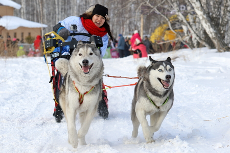 Novosibirsk, RUSSIA-FEBRUARY 23, 2019: the Girl is racing on a dog sled during the husky festival
