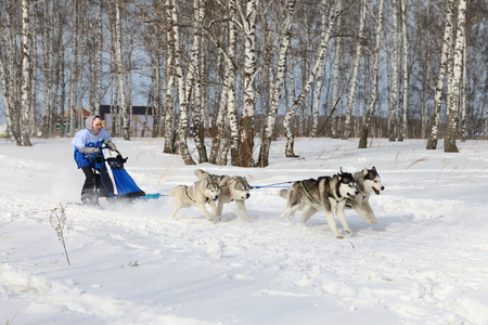 Novosibirsk, RUSSIA-FEBRUARY 23, 2019: Siberian husky race during winter husky festivals