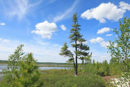 Summer landscape in the North of Western Siberia Stock Photo
