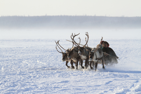 NADYM, RUSSIA - MARCH 05, 2011: family of Nenets reindeer herders rides on the tundra Banque d'images - 127298668