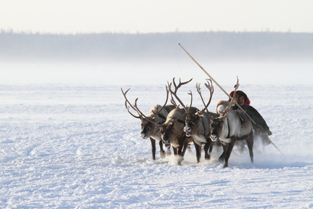 NADYM, RUSSIA - MARCH 05, 2011: family of Nenets reindeer herders rides on the tundra Banque d'images - 127298669
