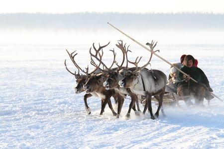 NADYM, RUSSIA - MARCH 05, 2011: family of Nenets reindeer herders rides on the tundra Banque d'images - 127298670
