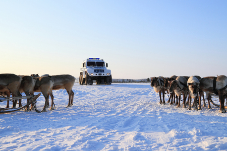 NADYM, RUSSIA - FEBRUARY 26, 2012: Modern police all-terrain vehicle Trekol and reindeer in Yamal tundra Banque d'images - 127298671
