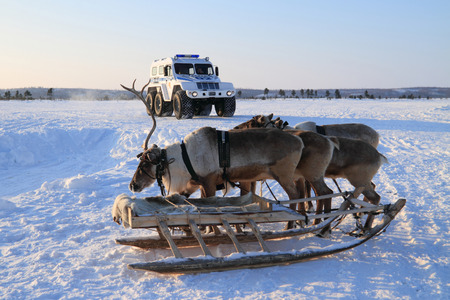 NADYM, RUSSIA - FEBRUARY 26, 2012: Modern police all-terrain vehicle Trekol and reindeer in Yamal tundra Banque d'images - 127298672