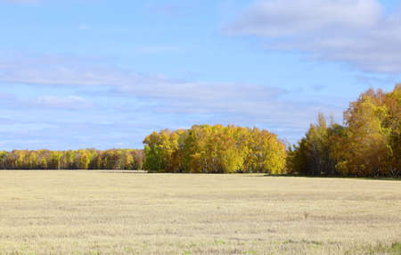 Mown wheat field on a Sunny day in the Altai territory of Russia