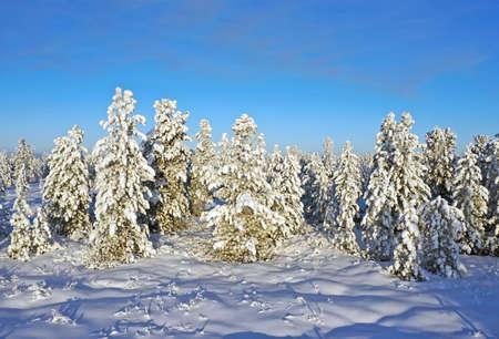Siberian taiga on a Sunny frosty day Stock Photo