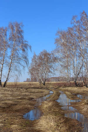 Spring landscape with a field road and meltwater on the edge of a birch forest in the south of Western Siberia