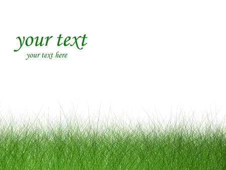 Green Blades of Grass Isolated on White Background Stock Photo