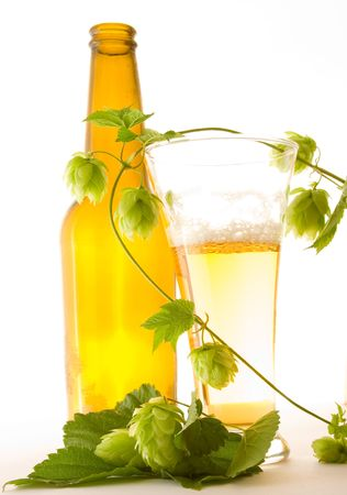 Glass beer and hop  Stock Photo