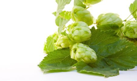 bitterness: Hop isolated on white background