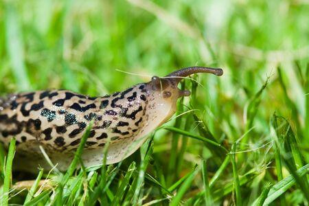 babosa: Slug Foto de archivo