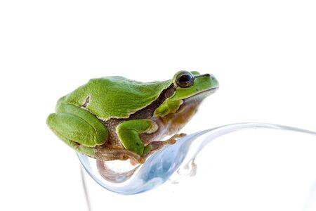 wetness: Tree frog Stock Photo