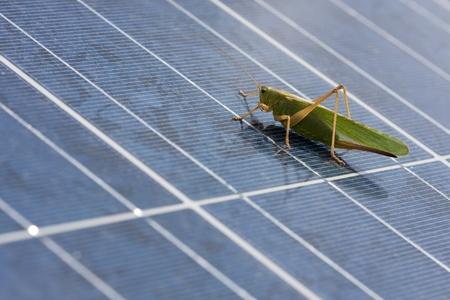 grasshopper to photovoltaic panel  photo