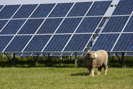 celula animal: Panel solar Foto de archivo