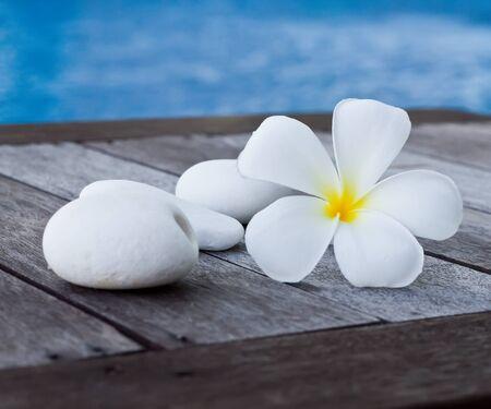 plumeria obtusa with white stone