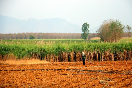 Vibrant panorama of sugar cane plantation in thailand photo