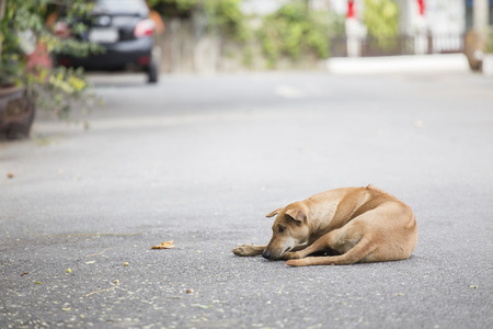 on the lonely road: Lonely stray dog on the street.
