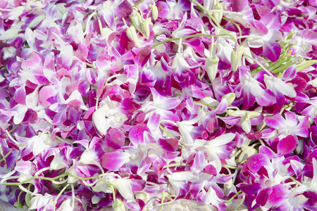 bouquet fleurs: Pile of many orchid from Pak Klong Talad in Thailand. Banque d'images
