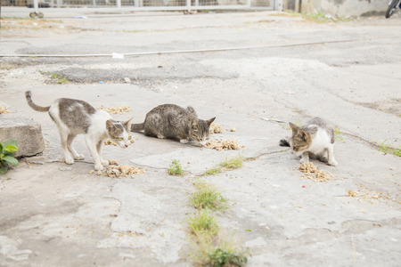 cat eating: Stray cat eating food on the street with selective focus. Stock Photo