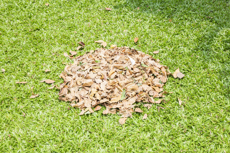 turf pile: Pile of dry leaves on green grass Stock Photo