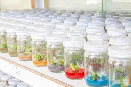 culture: Many plant tissue culture orchid in bottle with selective focus