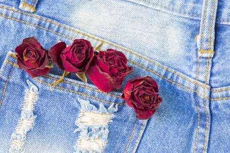 lacking: Dry rose in back pocket jean with copyspace background Stock Photo