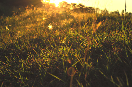 plant growth: Evening sunset on green glass with fare,Soft focus,Abstract nature background